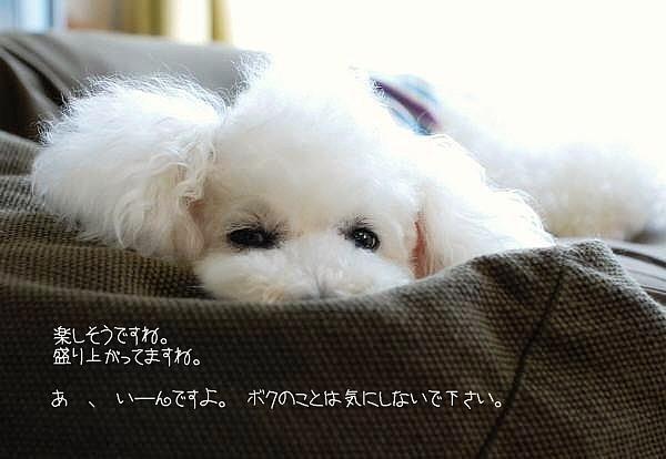おうち飲み2011*初夏_d0083623_20561546.jpg