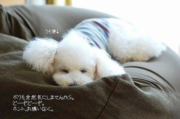 おうち飲み2011*初夏_d0083623_20563221.jpg