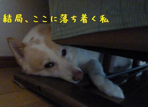 b0138430_14273237.jpg