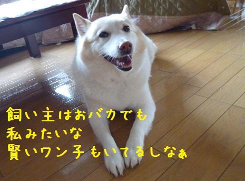 b0138430_1440764.jpg