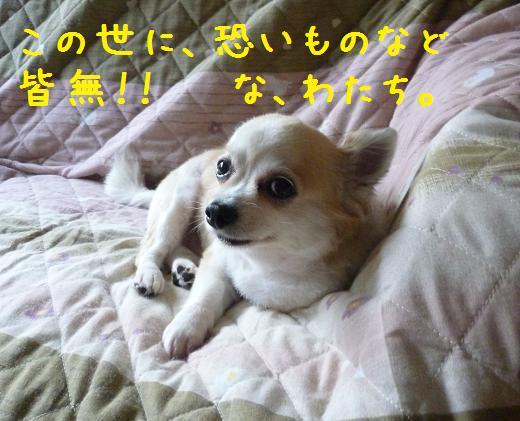 b0138430_14491226.jpg