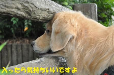 f0176830_1653983.jpg