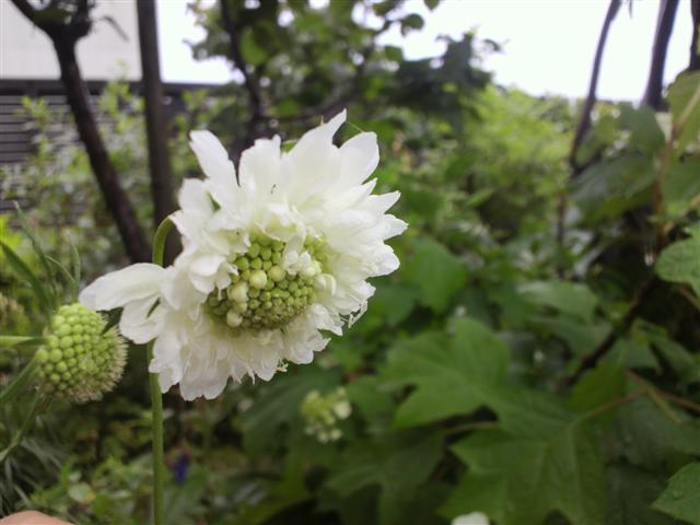 雨の庭_b0132338_833463.jpg