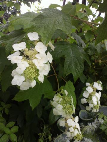 雨の庭_b0132338_8335813.jpg