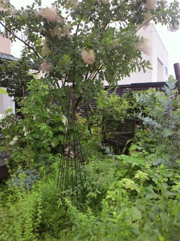 雨の庭_b0132338_8345015.jpg