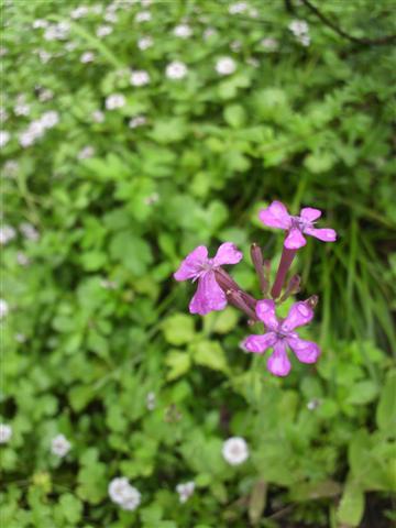 雨の庭_b0132338_8351041.jpg