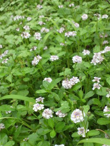 雨の庭_b0132338_835209.jpg