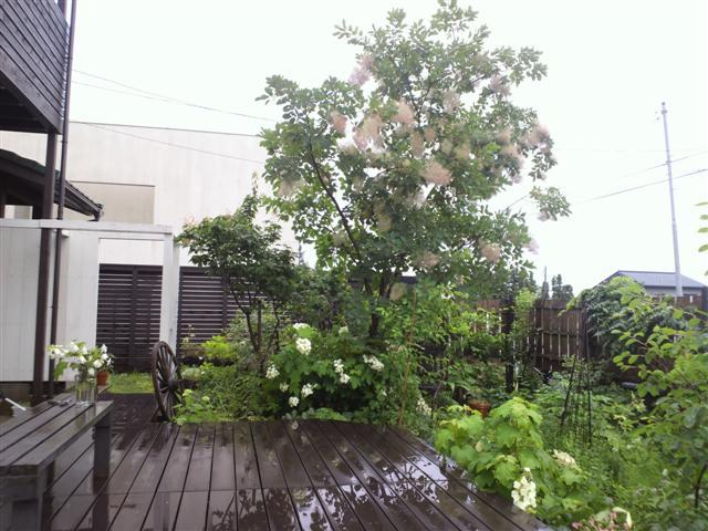 雨の庭_b0132338_835394.jpg