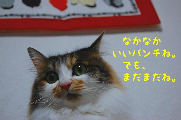 c0181639_113361.jpg