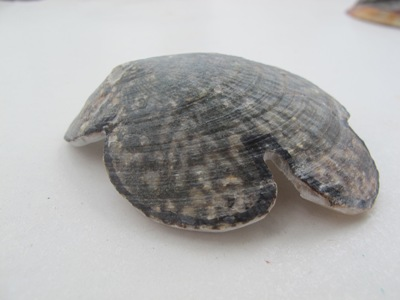 6月 26日  ナーマ浜で見つけたもの。_b0158746_21274457.jpg