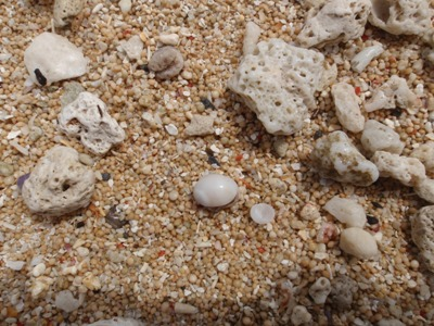 6月 26日  ナーマ浜で見つけたもの。_b0158746_21302396.jpg
