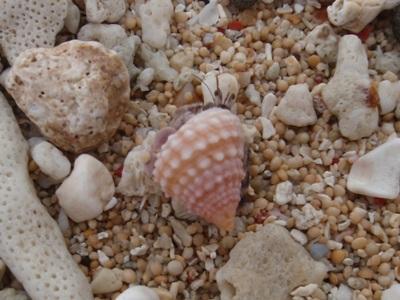 6月 26日  ナーマ浜で見つけたもの。_b0158746_2131910.jpg