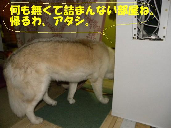b0201756_12585277.jpg