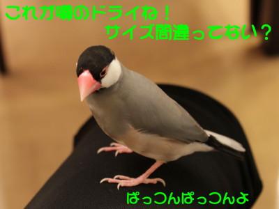b0158061_2154141.jpg