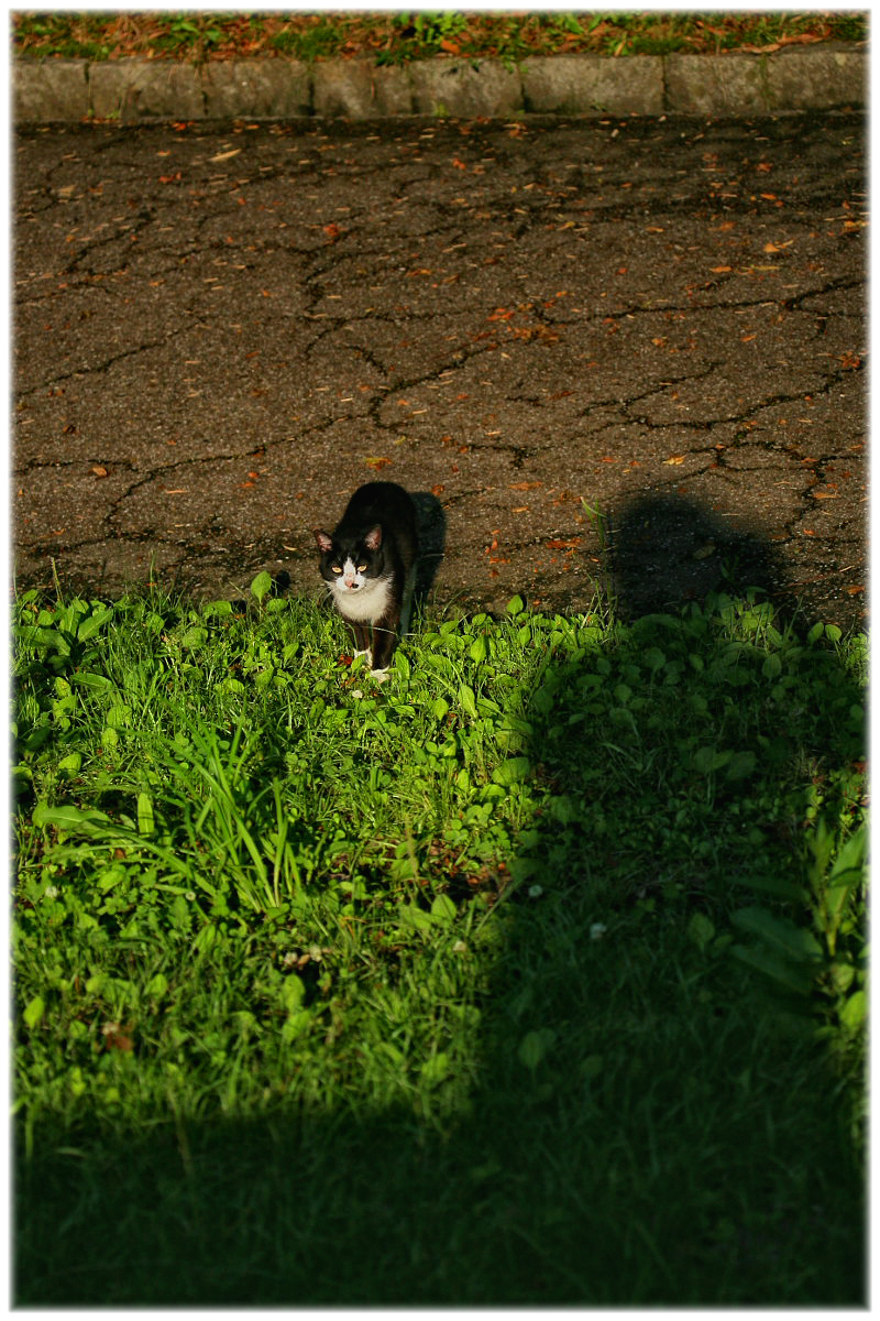 猫にゃん_f0021869_21342540.jpg
