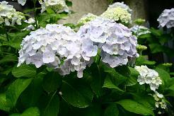 風街ろまん いい匂い 124 「みんなで歌おうゲゲゲのゲ」_c0121570_17463976.jpg