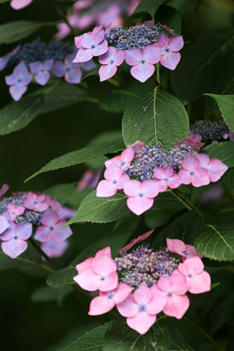 花菖蒲を見て来ました。_f0030085_17404195.jpg