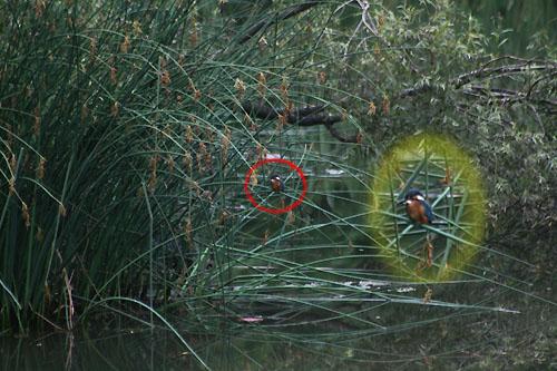 花菖蒲を見て来ました。_f0030085_17435913.jpg