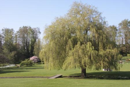 The Garden In Leeds Castle_e0138008_192049.jpg