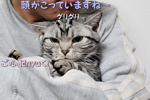 c0211109_32229.jpg