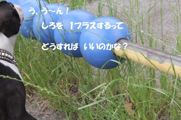 f0186509_20514785.jpg