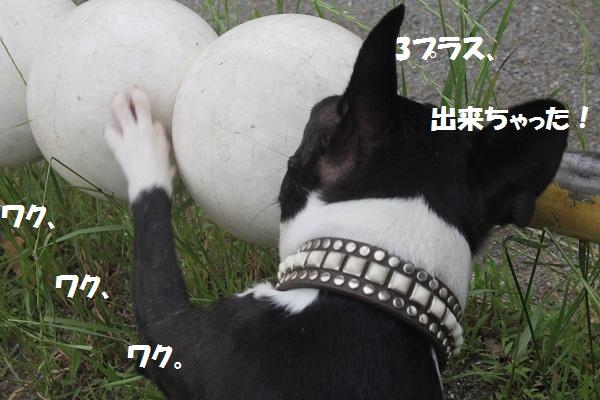f0186509_21412728.jpg