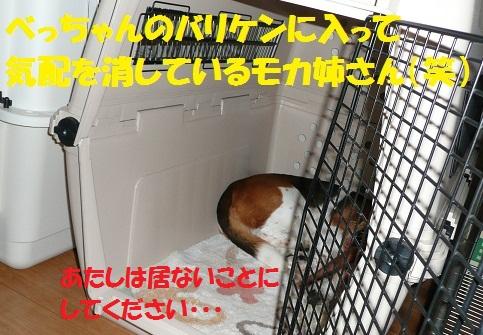 f0121712_15593794.jpg