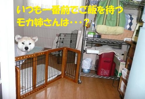 f0121712_160876.jpg