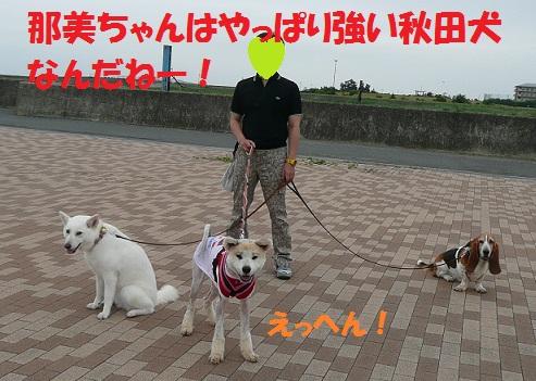 f0121712_1625047.jpg