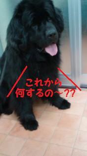 f0077931_1952033.jpg