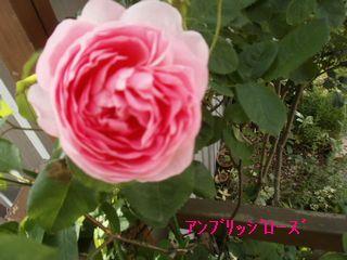 d0020136_946234.jpg