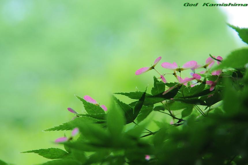 緑_f0079943_1344198.jpg