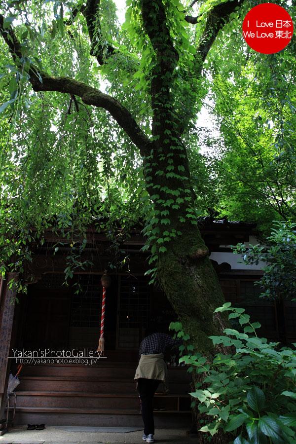 「そうだ 金沢、行こう。」と誘われ着物美女写真撮影 06 金沢黒瓦のある街並み[茶屋街編]_b0157849_529013.jpg