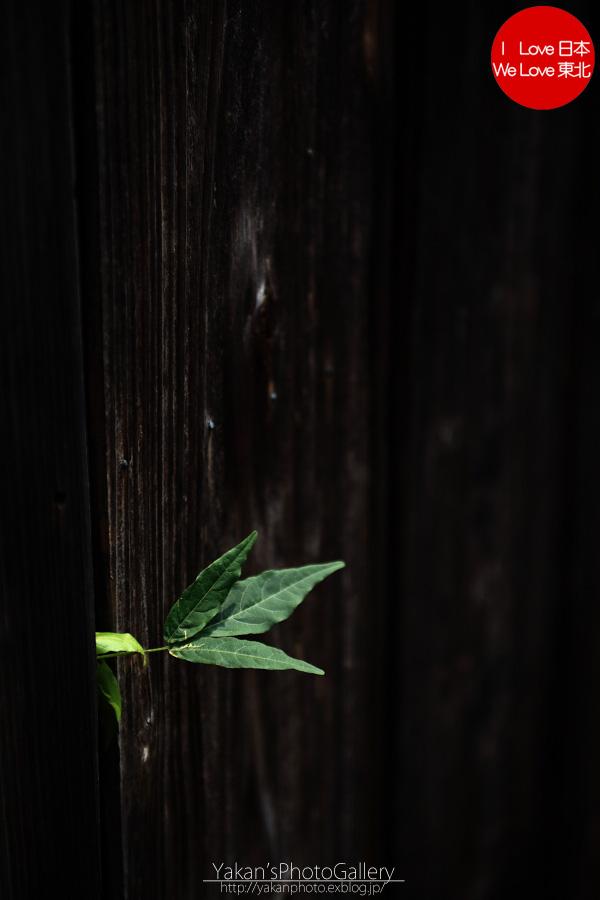 「そうだ 金沢、行こう。」と誘われ着物美女写真撮影 06 金沢黒瓦のある街並み[茶屋街編]_b0157849_5292192.jpg