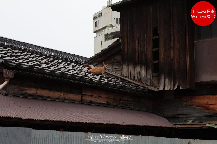 「そうだ 金沢、行こう。」と誘われ着物美女写真撮影 07 金沢黒瓦のある街並み[武家屋敷周辺]_b0157849_5432018.jpg
