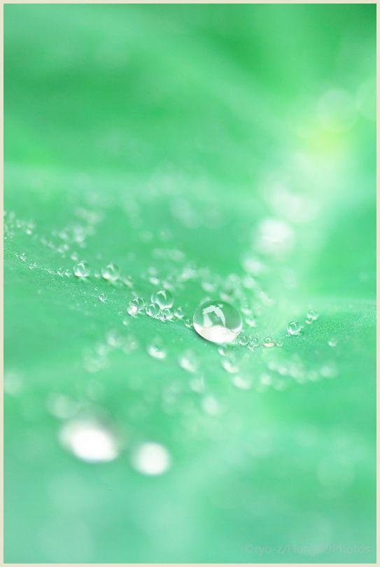 梅雨の贈り物 PENTAX K10D_e0063851_14181889.jpg