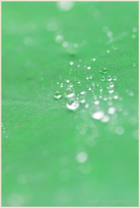 梅雨の贈り物 PENTAX K10D_e0063851_14182623.jpg
