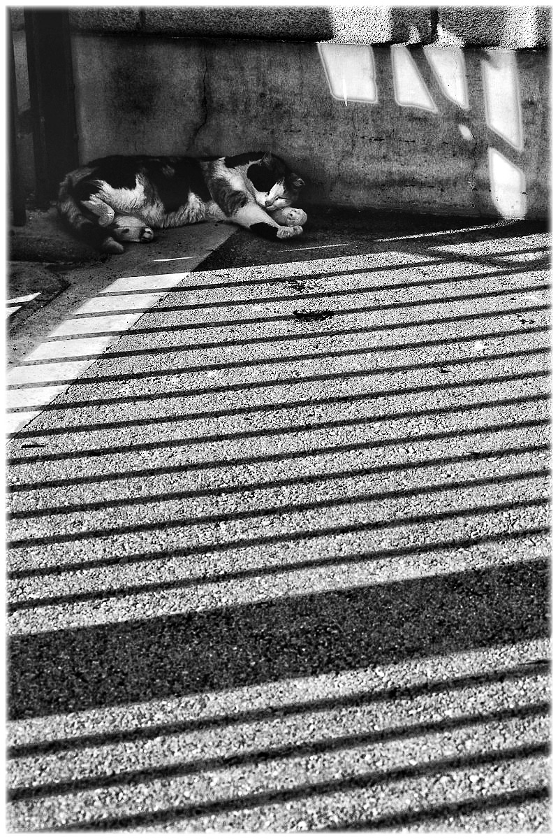 猫にゃん_f0021869_2322539.jpg