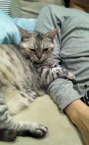 Leo LOVES Tom_b0195783_10285850.jpg