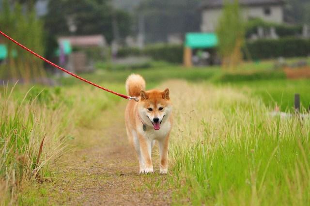 田んぼのど真ん中_a0126590_545251.jpg