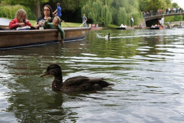 ケンブリッジ 800年の歴史をもつ世界最高峰の大学街_f0083294_4243741.jpg