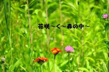 f0212597_14253942.jpg