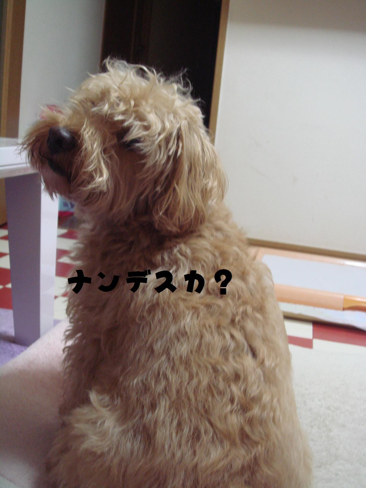 b0199912_1185699.jpg