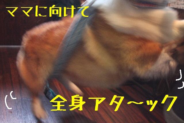 b0130018_9444011.jpg