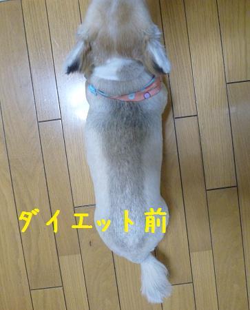 b0138430_2145094.jpg