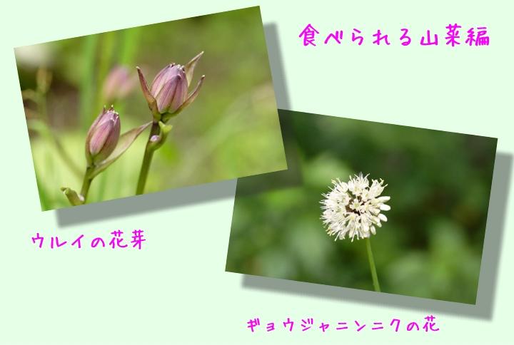 d0012134_15103873.jpg