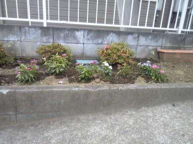 お花満開!_f0214534_8332285.jpg