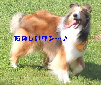 e0195743_111501.jpg