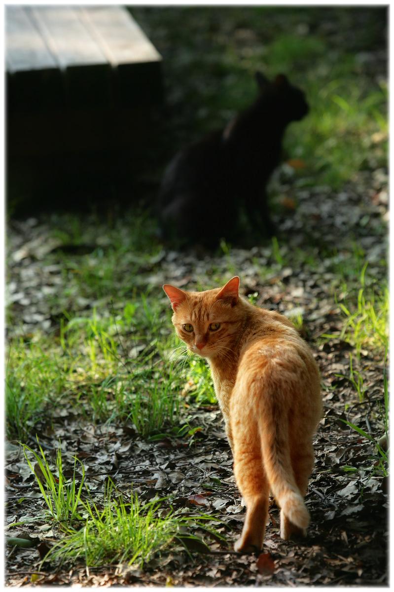 猫にゃん_f0021869_2293490.jpg