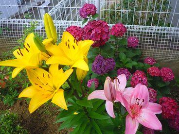 梅雨が明けたら「Cool & Beauty」_b0102572_18213468.jpg